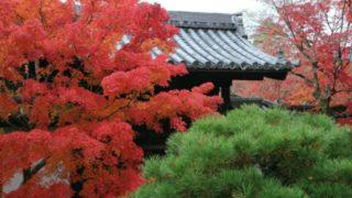 天授庵の紅葉の画像